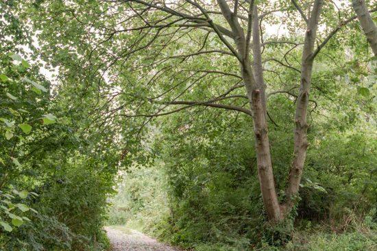 railway-fields-public-access-Umfreville-Road-green-lanes-n4