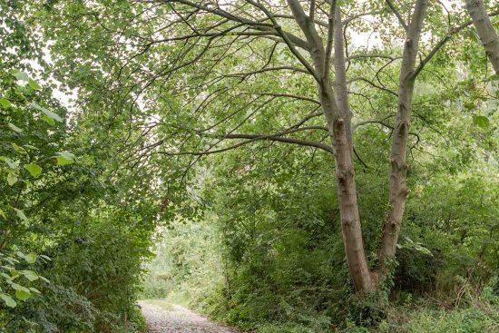 railway-fields-public-access-Umfreville-Road-green-lanes-n4.jpg